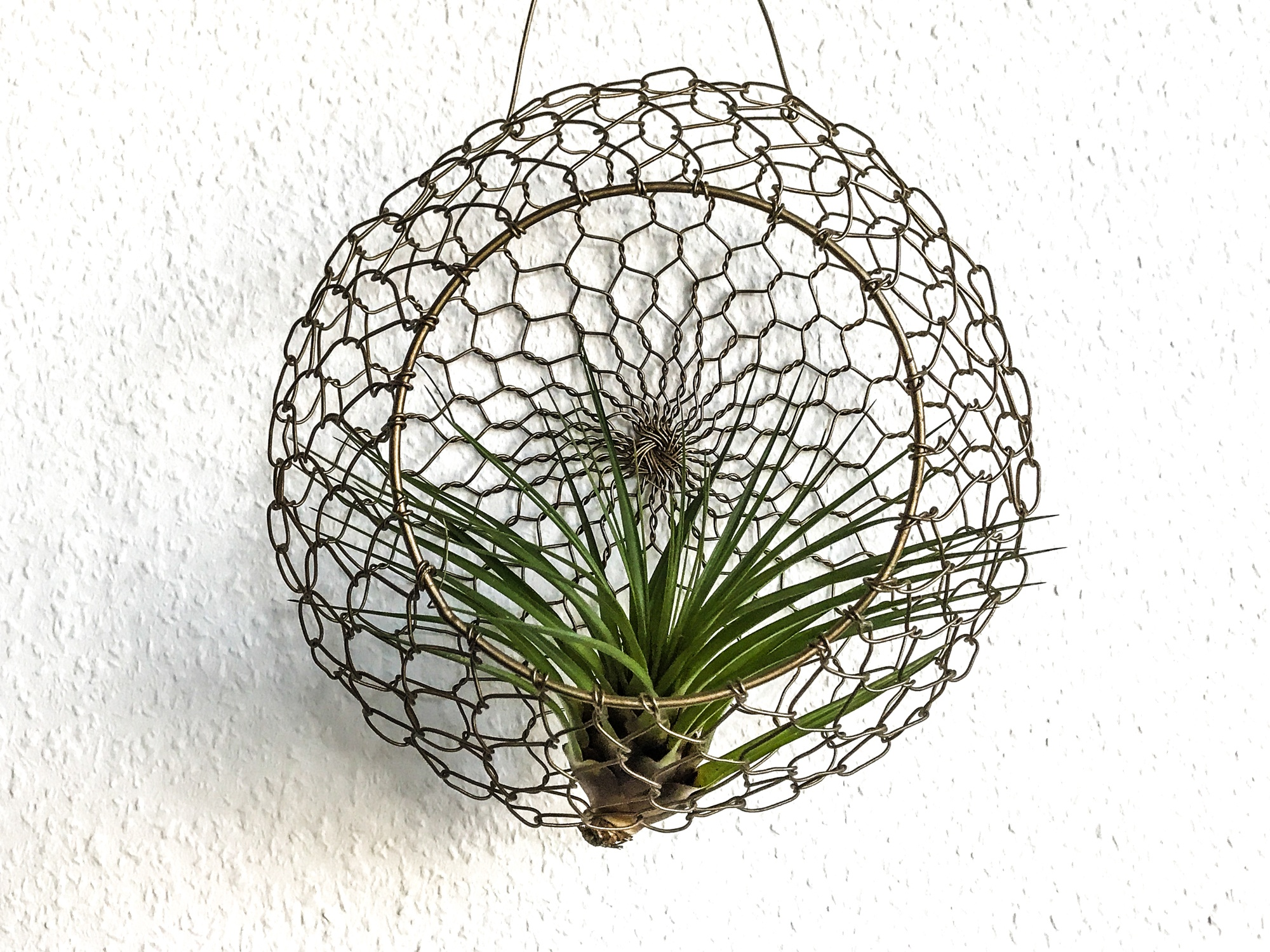 Wohntrend: Air Plants